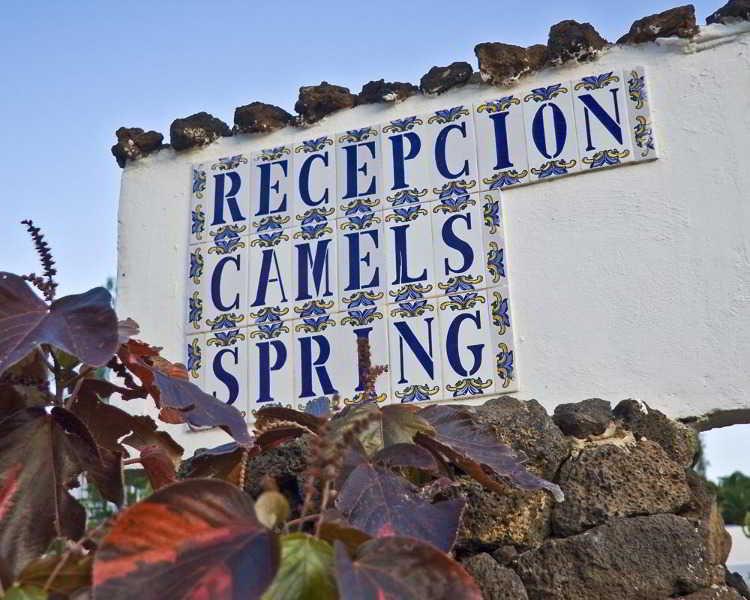 Camel Spring, Costa Teguise