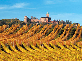 Escursioni a Strasbourg - Alsace wine route from Strasbourg