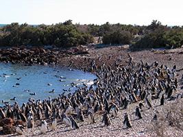 Ausflüge in Puerto Madryn - Punta Tombo