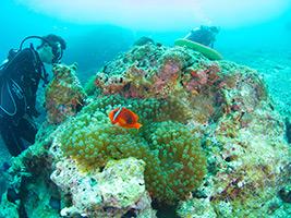 Escursioni a Okinawa - Explore Iriomote Island on a Stand Up Paddleboard!