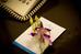 http://photos.hotelbeds.com/giata/small/13/134691/134691a_hb_w_010.jpg