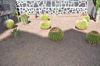 Apartamentos Los Cactus - Sport