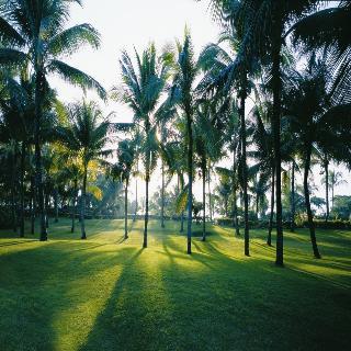 Shangri Las Mactan Resort and Spa Cebu - Generell