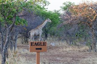 Eagle Tented Lodge & Spa - Sport