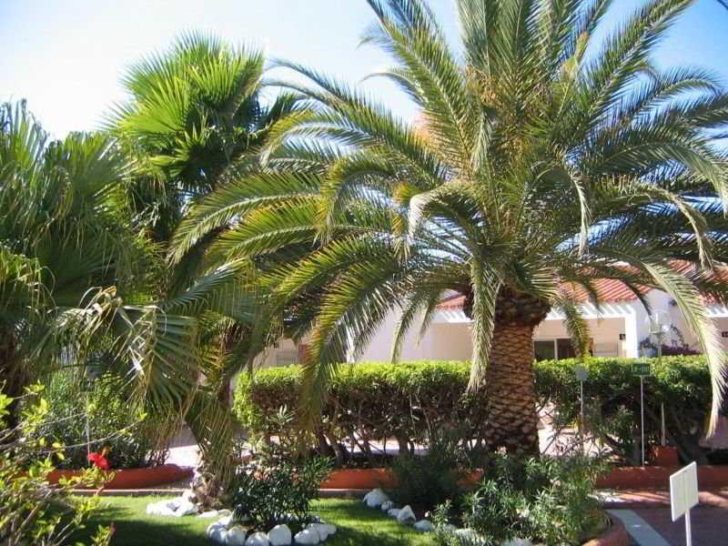 Bungalows Parque Paraiso 1 - Terrasse