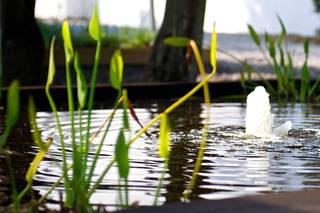 Bloomestate Swellendam - Generell