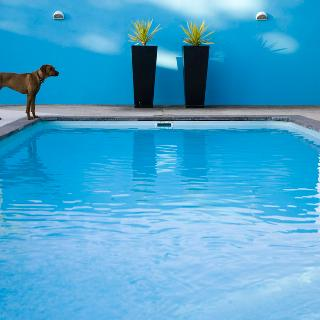 Bloomestate Swellendam - Pool