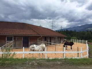 Der Schmittenhof und Nebenhaus - Generell