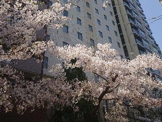 Hotel JAL City Hiroshima, 7-14 Kaminobori-cho, Naka-ku,…
