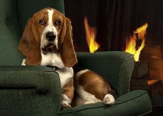 Quality Inn Waddling Dog