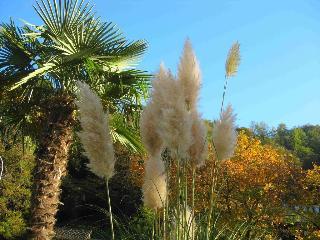 Albergo Gardenia - Generell