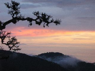 Dantica Cloud Forest Lodge - Generell