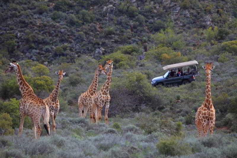 Madi Madi Karoo Safari Lodge - Sport