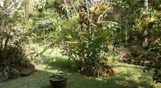 Ubud Inn Resort, Jl Monkey Forest Ubud,