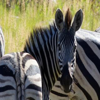 Kololo Game Reserve, Bakkerspas Road ,