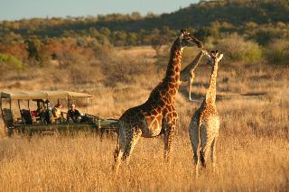Makweti Safari Lodge, Welgevonden Game Reserve…