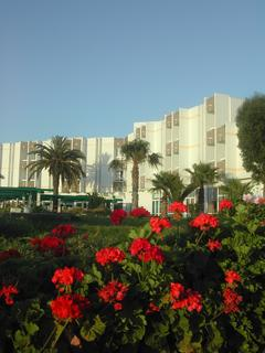 Farah Safi, Avenue Zerktouni Safi,