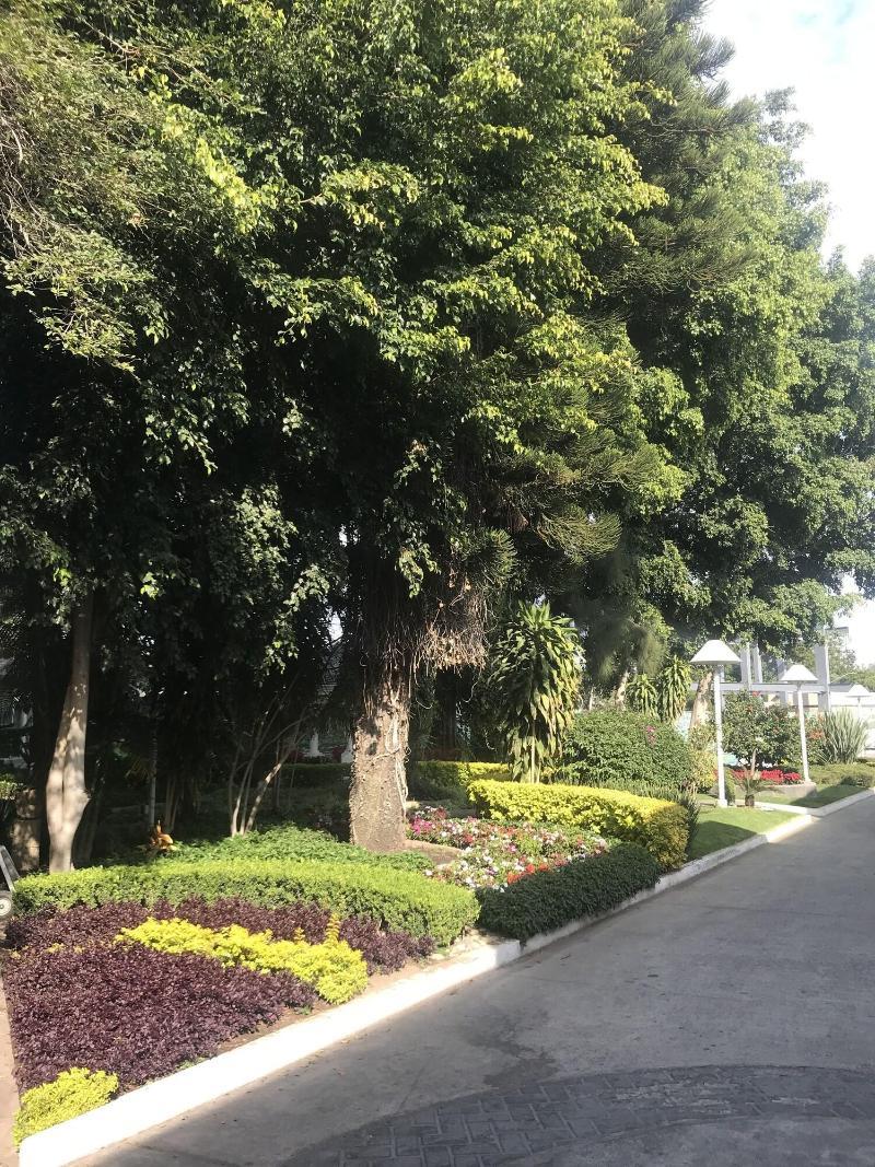 General view Arborea