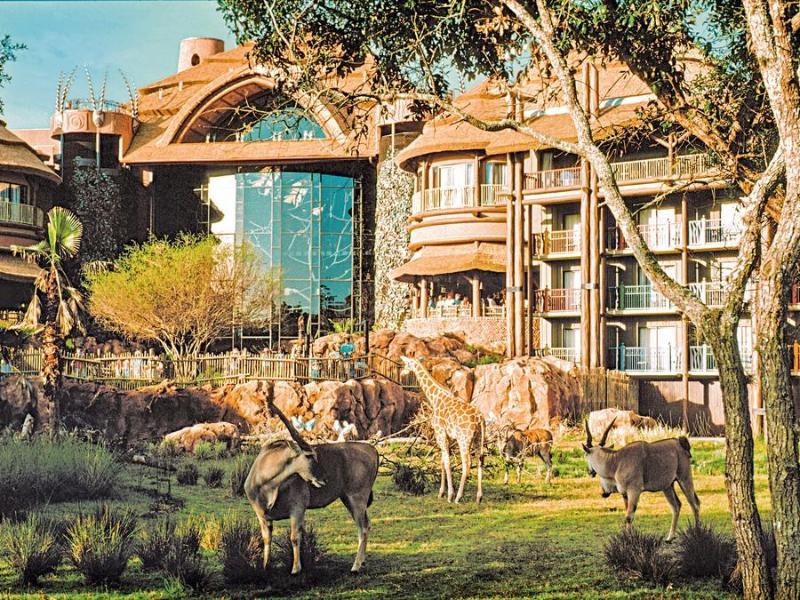 Hotel Disney Animal Kingdom Lodge Foto 12
