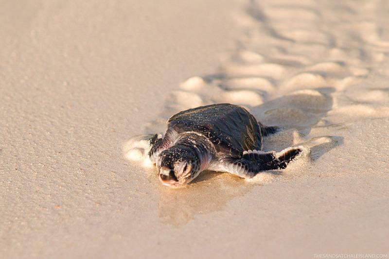 Image result for sands at chale island resort