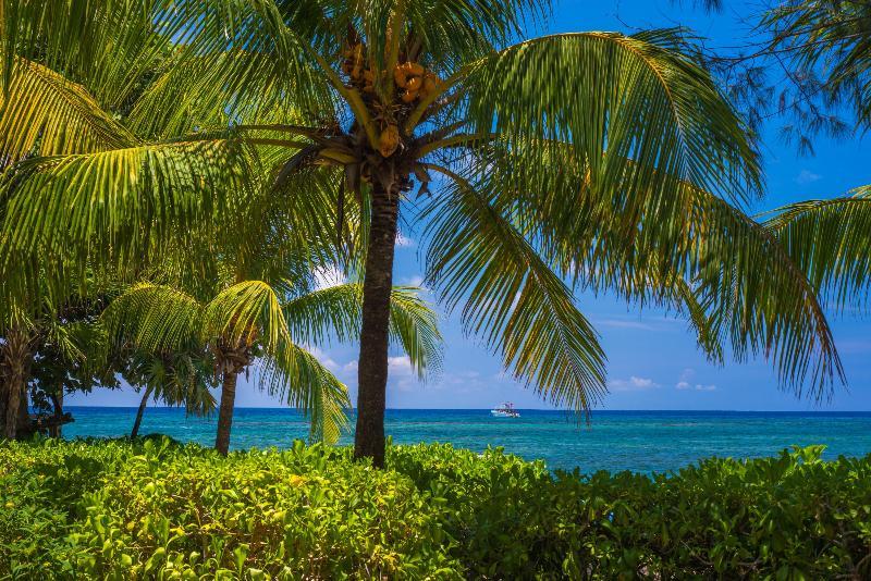 Las Rocas Resort & Dive Center - Hotel - 1