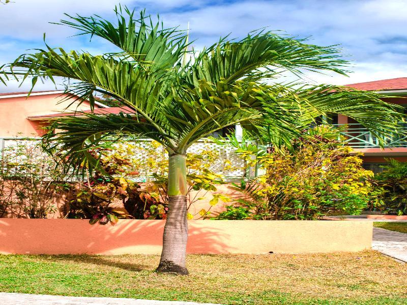 General view Halcyon Palm