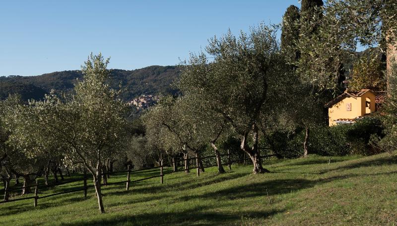 Terrace Borgo Tenuta La Bandita