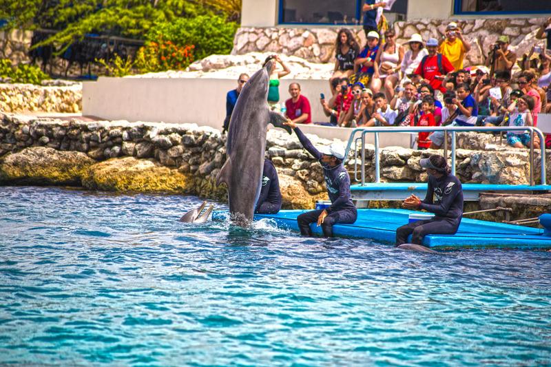Sports and Entertainment The Royal Sea Aquarium Resort