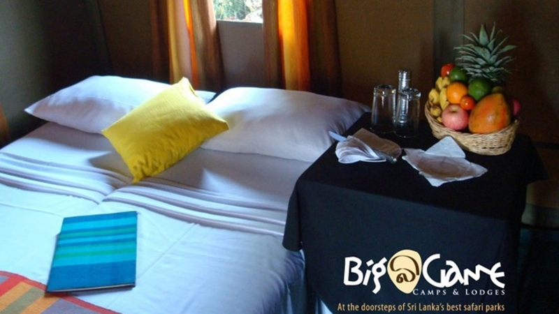 Room Big Game Camp - Yala