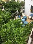 Terrace Morfo