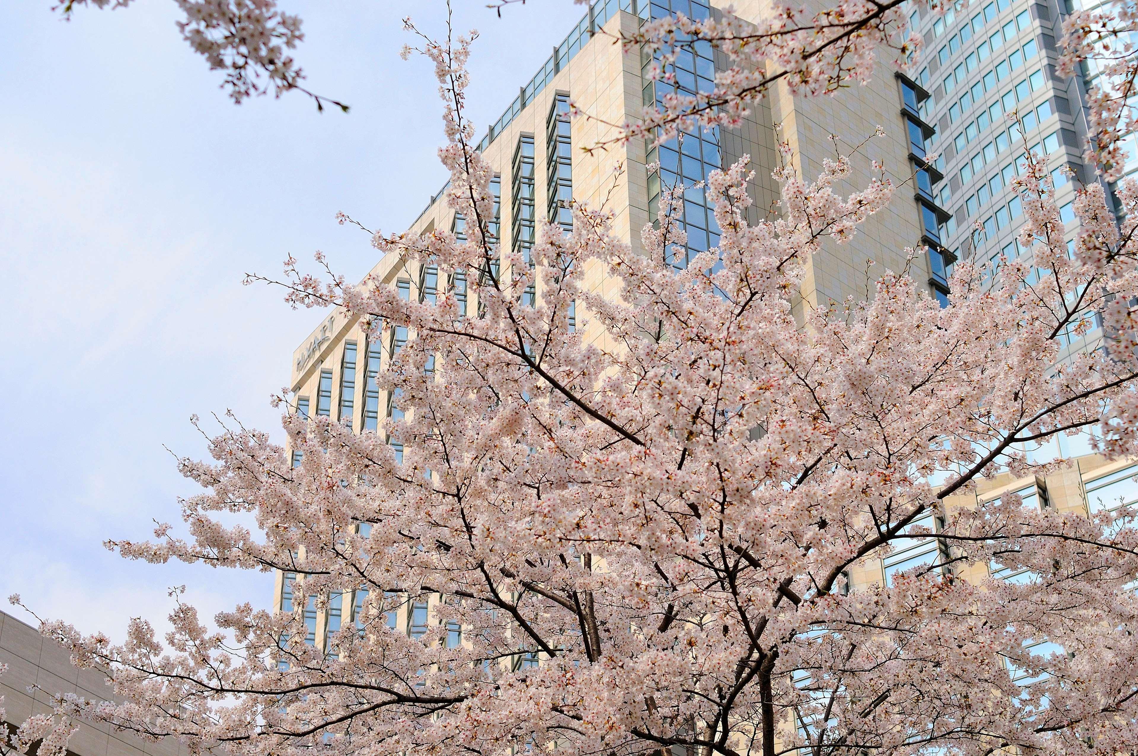 Grand Hyatt Tokyo, Minato
