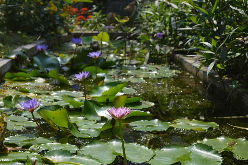 Orchid Garden Homestay, Điện Bàn
