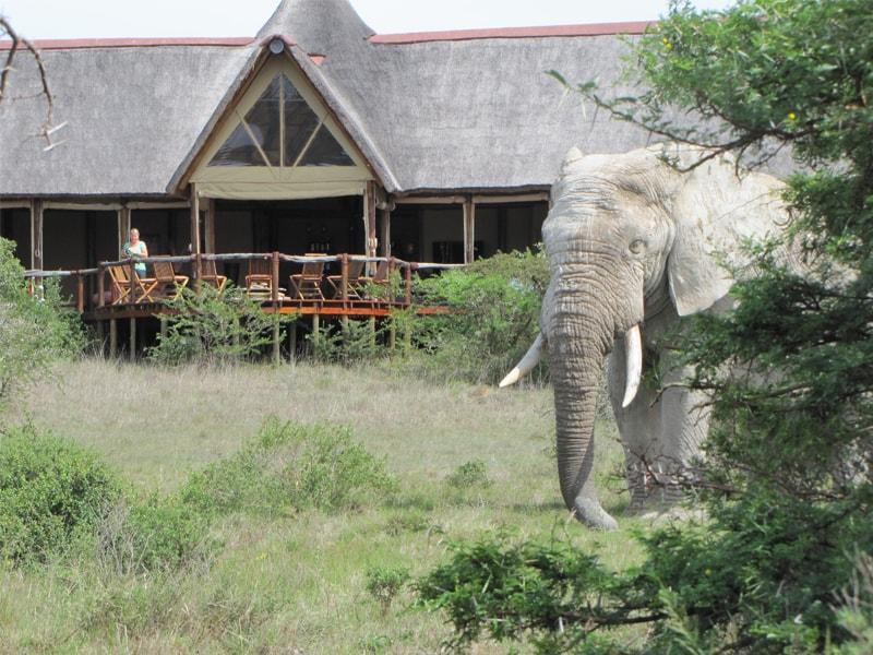 Bush Lodge- Amakhala Game Reserve, Cacadu