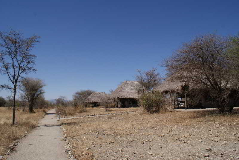 Whistling Thorn Camp, Babati